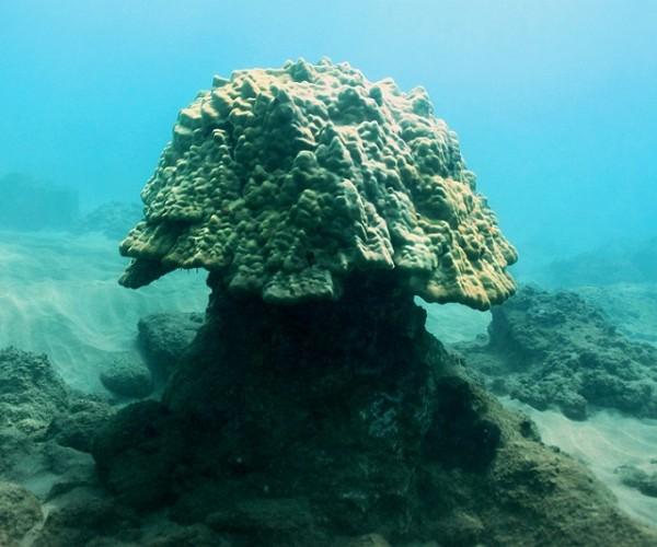 Coral reef expedition at Makena Landing