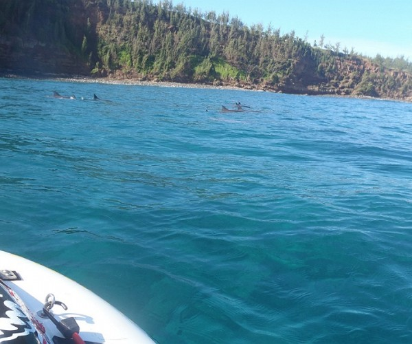 Playing with the Dolphins at Peahi Bay