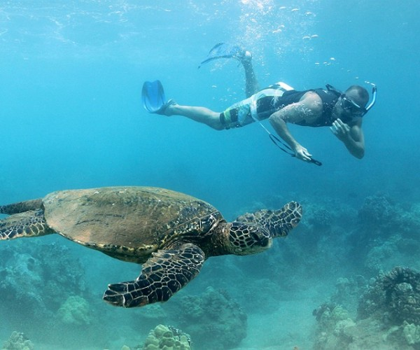 Chris freediving with the turtles